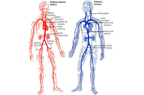 Que debes saber del sistema venoso